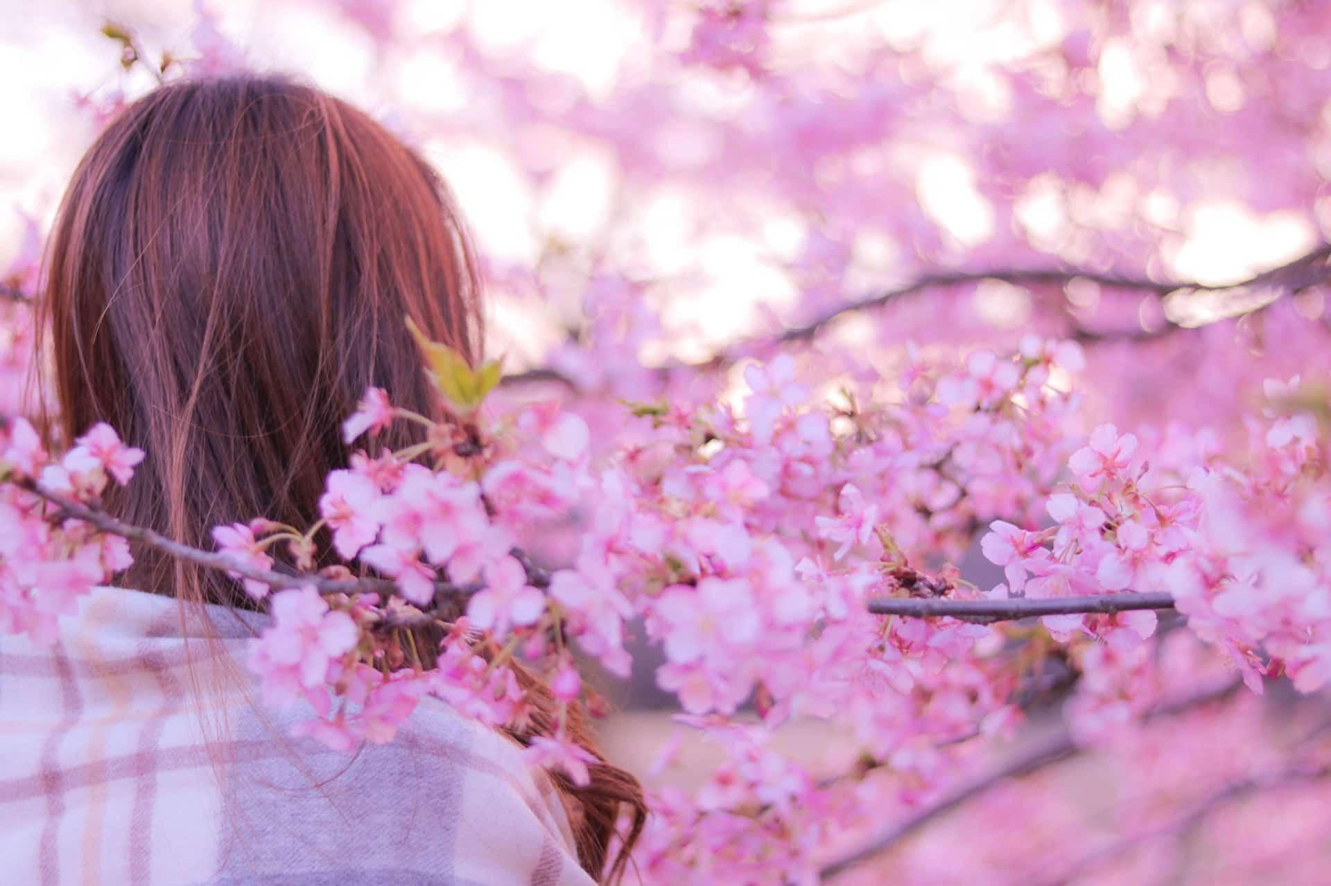 【2018年最新版】桜ソング厳選26曲。最新曲から懐かしい名曲までを特集してみました